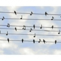 What to Look for in an Online Singing Course